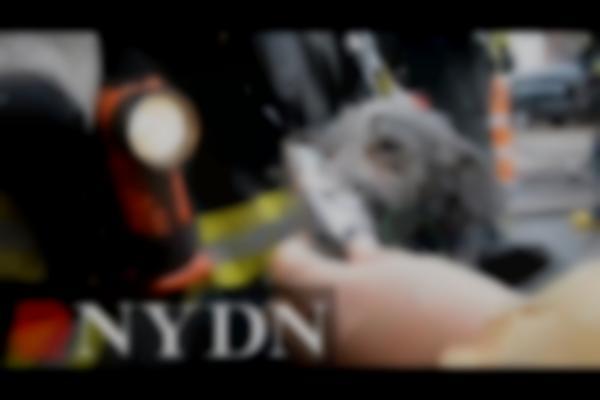 Dog rescued from devastating Brooklyn fire