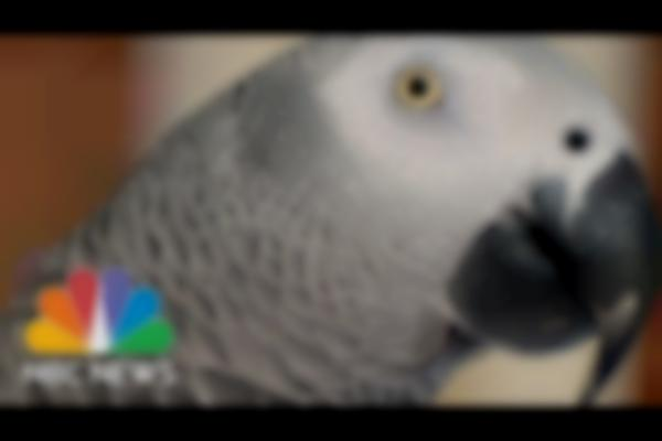 Missing Parrot Shows Up Years Later Speaking Spanish | 3rd Block | NBC News