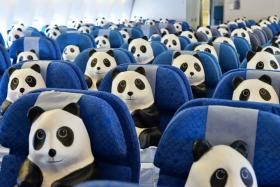 1,600 papier-mache pandas have invaded Hong Kong as part of a campaign to raise awareness about the endangered pandas and its dwindling population.