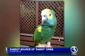 A parrot was mistaken for a lost child in  Connecticut, US.