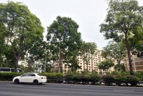 TRAGIC: Mr Ho Peng Wah was riding on the Central Expressway (CTE) near Jalan Bukit Merah (above) when he was killed by a falling tree branch.