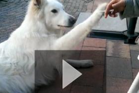 Dog to human: No smoking