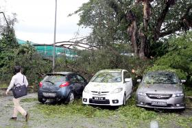 FALLEN: Three cars were damaged when a tree fell yesterday afternoon at Jalan Kuras after heavy rain and strong winds.