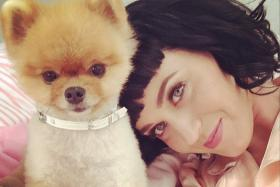 Jiff the Pomenarian, who was in Katy Perry's Dark Horse video, is also a Guinness world record holder.