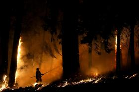 A firefighter monitors a backfire as he battles the King Fire on September 17, 2014 in Fresh Pond, California.