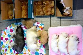 The puppies were in three black cloth bags hidden under the driver's seat, the front passenger's seat and the glove compartment of the Singapore-registered car.