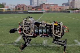 As part of a Robotics challenge to develop projects for disaster response, MIT researchers unveiled last week their new robotic cat (tested to scuttle at an impressive 40km/h) that aims to help the fire department.