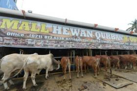 """This picture taken on September 30, 2014 shows livestock displayed at a """"cow showroom"""" ahead ofthe Eid Al-Adha festival in Depok."""