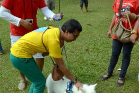 """Organiser Syed Azmi petting a dog while volunteers and pet owners (in red) look on during the """"I Want To Touch A Dog"""" event on Oct 19, which has triggered an investigation from the Islamic Development Department."""