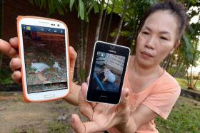 HORRIFIC: Ms Grace Tan showing photos of Ling Ling dead and alive.