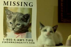 YouTube channel The Pet Collective has made an adorable cat-filled adaptation of dark thriller Gone Girl.