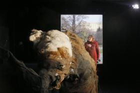 """A woman looks at a frozen woolly baby mammoth named """"Yuka"""" at the Central House of Artist in Moscow, October 28, 2014."""