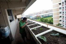 Urban farmers in Singapore