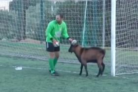 A goat walked onto the soccer pitch during a game on the Greek island of Crete.