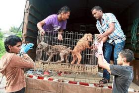 Malaysia Independent Animal Rescue members transporting two rescued poodles onto their van.