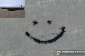 Say: Smiley moo!