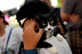 HELLO, KITTY: Kincaid, which loves to sit on his owner's shoulder, often has a perpetually shocked face.