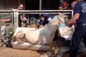 Firefighters rescued a horse stuck in a bathtub. Yes you read that sentence right.