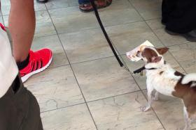 A Facebook user snapped this photo of a dog lining at a Singapore Pools shop with its owner.