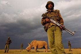 Sudan is the last of its kind in the world and is now guarded around the clock by armed guards.
