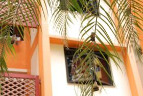 PALM TEA: MP Indranee Rajah called the tree a 'tea bag tree', after spotting it on Monday.