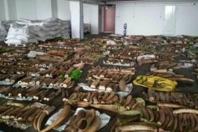 Authorities seized illegal ivory tusks, rhinoceros horns and big cats' teeth, estimated to be worth $8 million.