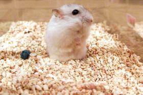 A South Korean instructor swallowed a hamster in front of his students to stop them from teasing animals.