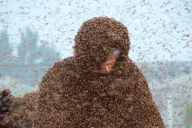 What a load: The bee keeper let about a million bees land on him.