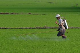 """FILE PHOTO: Four Chinese """"left behind"""" children died from pesticide poisoning."""