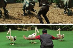 A zookeeper from Singapore Zoo has taken part in the global trend to recreate the popular Chris Pratt pose from the movie Jurassic World.