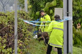 DEAD: The body of Mr Ow Lew Bin was found in the grass next to the Bukit Timah Expressway.