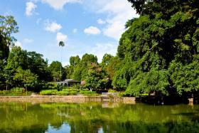 Swan Lake at Singapore Botanic Gardens
