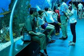 LEGAL ACTION: Mr Ignatius Tan suffered injuries after his left leg was trapped between a travellator and a wall at the S.E.A Aquarium (above).