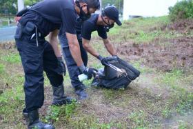 Pest controllers removing a rat carcass near Bukit Batok MRT station on Dec 22 December last year.