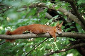 A squirrel (not this one) caused more than $600 worth of damage in a private bar in the UK.