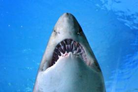 Doctors had to amputate surfer's left leg after a tiger shark attacked him last Friday (Oct 9).