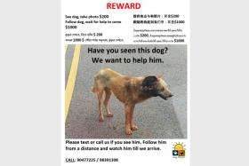 Hope Dog Rescue is offering a $1,000 reward for anyone who can help them find the injured dog from the Yishun area in their poster.