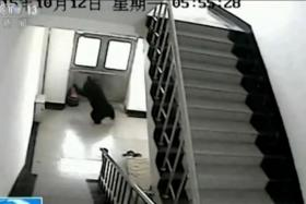 The bear was caught on CCTV as it explored the school.