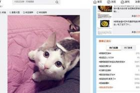 SCREENSHOT: In protest, pet owners posted photos of their pets.