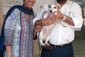 A couple identified as Mr and Mrs Singh were reunited with their Jack Russell terrier named Spikey that went missing nine years ago.