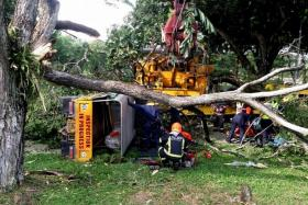ACCIDENT SCENE: Mr Chan Chong Jin describing how the piling machine got caught in the branches of the raintree canopy on Tampines Road. (Above) The lorry was tipped on its side.