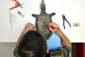 PRESERVED: Taxidermist Ken Mar putting up a pet parrot that he taxidermied previously and painting a turtle (above) to match its original flesh tones.