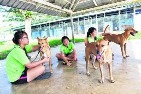 PLAYTIME, WALK TIME: (Above, from left) Teens Germaine Lee and Tiffany Tan and Ms Jolene Lee are volunteers who spend time playing with the dogs at an animal shelter.