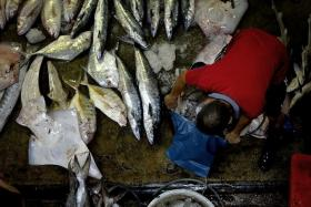 OPEN FOR BUSINESS: A worker handling an assortment of fishes, including stingrays.