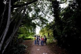 The Love Our MacRitchie Forest guides leading a tour through the trails of the CCNR.