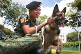 MAN'S BEST FRIEND: Lance Corporal Eddy Kwoh is german shepherd Meky's handler.
