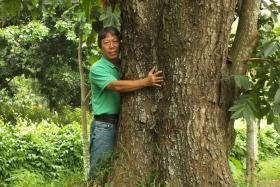 TREE-HUGGER: (Above) Mr Francis Lim with one of the mahogany trees he studied for his book. Its trunk is about 80cm in diameter.