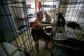 CLEANED UP: Madam Koh Poh Choo's (above) cats now live in new cages after volunteers from the Cat Welfare Society cleaned her cockroach-infested flat and bought her 11 new cages.