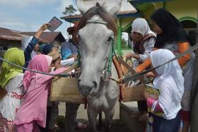 FANS: Mr Ridwan believes Luna's gentle nature attracts the children to his mobile library.