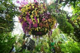 PRIMATE PLANT: A spiral of 1,000 orchids.